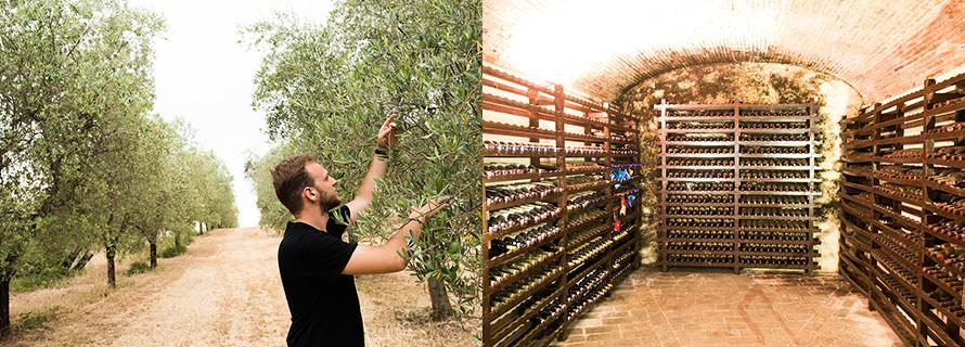 olive_farm